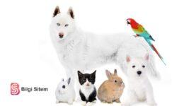 En Masrafsız Evcil Hayvanlar Hangileridir?