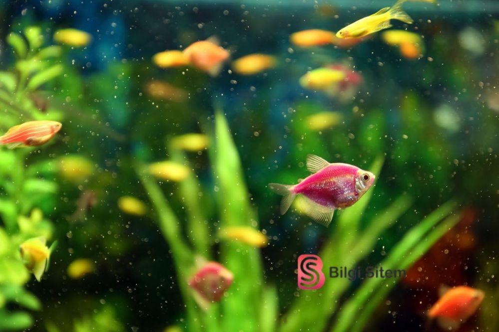 Masrafsız evcil hayvanlar balık