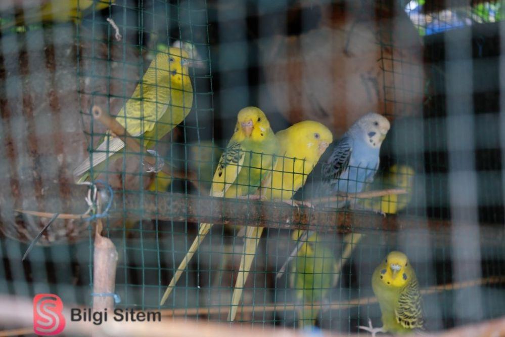 en masrafsız evcil hayvanlar kuş
