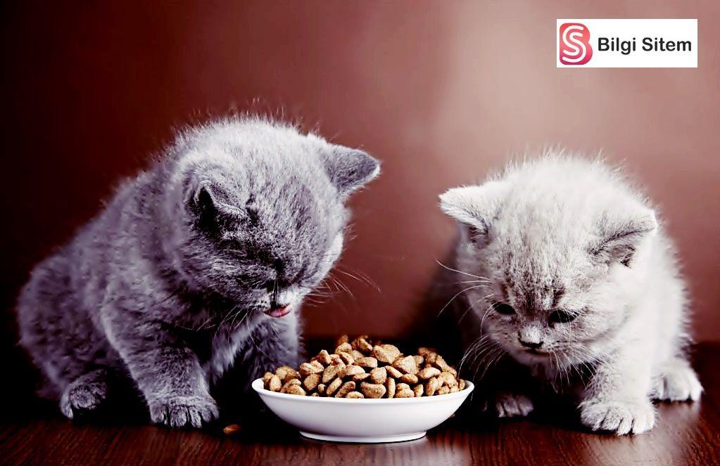 Kedi ödül maması seçerken dikkat edilmesi gerekenler