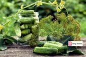 Saksıda Salatalık Nasıl Yetiştirilir?