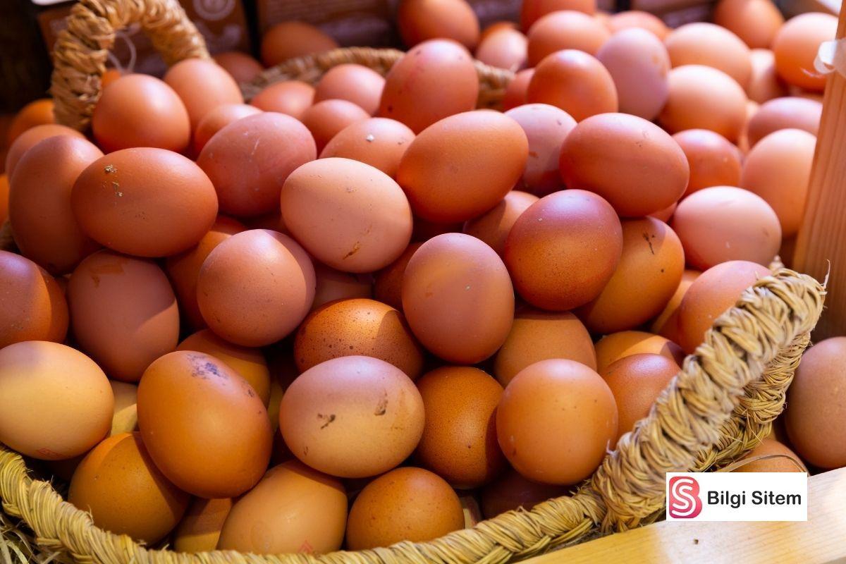 yumurta nasıl seçilir