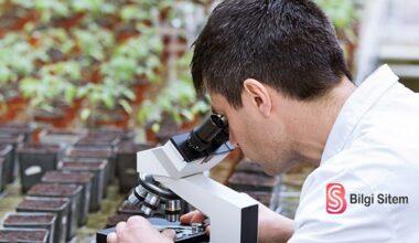 Biyolog Nasıl Olunur? Ne İş Yapar? Maaşları Ne Kadar?